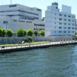 隅田川 清洲橋付近 3