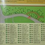 県の木 全国 リスト