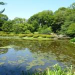 二の丸池2